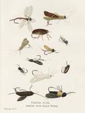 Fishing Flies I Poster von Gwendolyn Babbitt