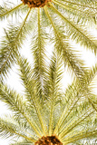 Below the Palms VI Prints by Karyn Millet