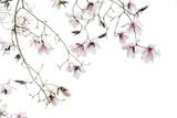 Bainbridge Magnolias I Print by Kathy Mahan