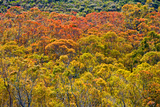 Colorful Trees Prints by Lee Peterson