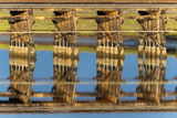 Railroad Bridge Reflection Prints by Lee Peterson