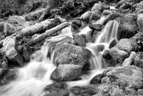 Forest Stream BW Posters af Douglas Taylor