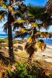 La Jolla Palms I Posters by Alan Hausenflock