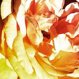 Bicolored Angel II Posters by Alan Hausenflock