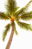 Below the Palms V Poster by Karyn Millet
