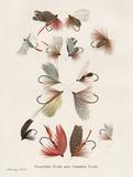 Fishing Flies II Kunstdrucke von Gwendolyn Babbitt