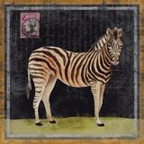 Zebra Poster von Lisa Ven Vertloh