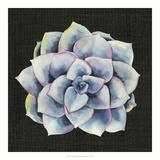 Julie Silver - Tropical Growth V *Exclusive* Digitálně vytištěná reprodukce
