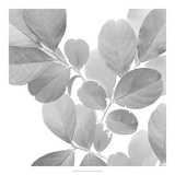 Dancing Leaves I *Exclusive* Giclee Print by Julie Silver