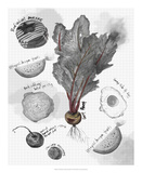 Food Sketches in Black and White II *Exclusive* Giclee Print by Julie Silver