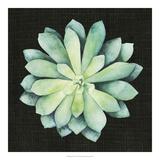 Julie Silver - Tropical Growth VI *Exclusive* Digitálně vytištěná reprodukce