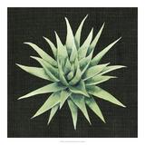 Julie Silver - Tropical Growth III *Exclusive* Digitálně vytištěná reprodukce