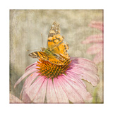 Tattered Butterfly Posters by Romona Murdock