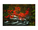 Fall in Smokies Prints by Robert Lott