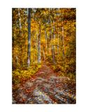 Ohiopyle Path Poster by Robert Lott