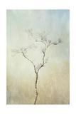 Tall Tree Print by Romona Murdock