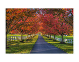 Lane in Fall Prints by Robert Lott