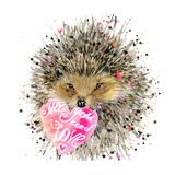 Watercolor Hedgehog. Hedgehog Illustration with Valentines Heart, Splash Watercolor Textured Backgr Prints by Fayankova Alena