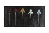 Midnight Irises Posters by Marysia Burr