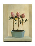 Protea Stand Premium Giclee Print by Hampton Hall