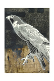 Peregrine Falcon Prints by  Urban Soule