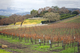 Dormant Vineyard Photo by Lillis Werder