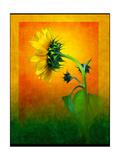 Sunflower Giclee Print by Doug Landreth