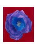 Purple Premium Giclee Print by Susan Jeschke