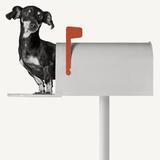 You've Got Mail Wood Print by Jon Bertelli