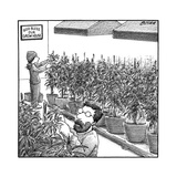 "Two people tending weed, and a sign that says ""God bless our grow house."" - New Yorker Cartoon Premium Giclee Print by Harry Bliss"