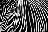 Zebra in Lisbon Zoo Wall Mural by Andy Mumford