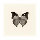 Butterfly VII BW Crop Poster by Debra Van Swearingen