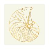 Coastal Breeze Shell Sketches VII Poster af Anne Tavoletti
