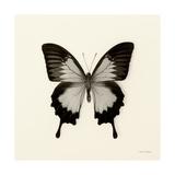 Butterfly III BW Crop Giclée-Premiumdruck von Debra Van Swearingen