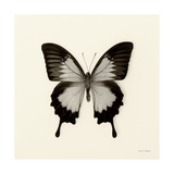 Butterfly III BW Crop Posters by Debra Van Swearingen