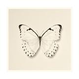 Butterfly II BW Crop Giclée-Premiumdruck von Debra Van Swearingen