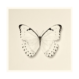 Butterfly II BW Crop Prints by Debra Van Swearingen