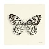 Butterfly V BW Crop Giclée-Premiumdruck von Debra Van Swearingen