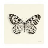 Butterfly V BW Crop Prints by Debra Van Swearingen