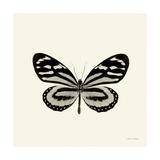 Butterfly VIII BW Crop Print by Debra Van Swearingen
