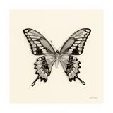 Butterfly VI BW Crop Giclée-Premiumdruck von Debra Van Swearingen