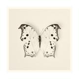 Butterfly IV BW Crop Print by Debra Van Swearingen