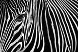 Zebra in Lisbon Zoo Art by Andy Mumford