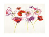 Pink and Red Somniferums Prints by Shirley Novak