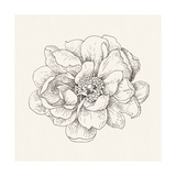 Pen and Ink Florals IV Posters by Danhui Nai