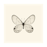 Butterfly I BW Crop Giclée-Premiumdruck von Debra Van Swearingen