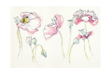 Pink Somniferums Print by Shirley Novak