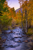 Autumn Stream View, Biship Creek Canyon Eastern Sierras Photographic Print by Vincent James