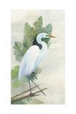 Standing Egret I Crop Poster von Avery Tillmon
