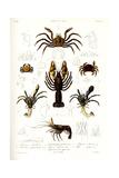 Crustaceos N1, Atlas de La Historia Física y Política de Chile, 1854 Giclee Print by Claudio Gay
